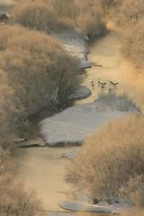 釧路川の夕景
