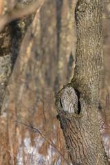 木の穴から望む