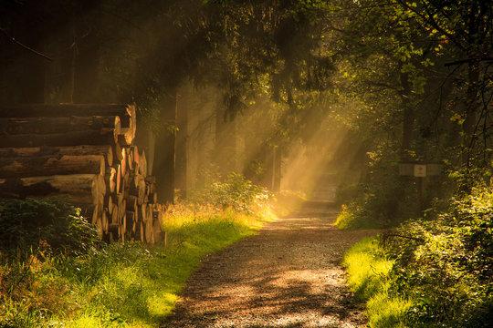 Sonnendurchfluteter Waldweg