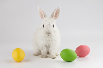 Easter bunny rabbit with colorful eggs