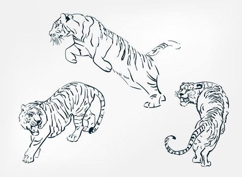 japanese chinese vector design set tiger sketch
