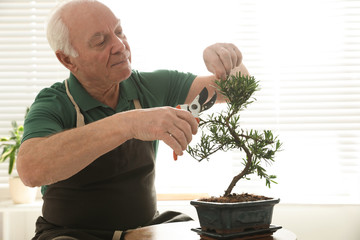 Foto op Plexiglas Bonsai Senior man taking care of Japanese bonsai plant indoors. Creating zen atmosphere at home