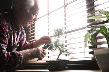 Tuinposter Bonsai Senior man taking care of Japanese bonsai plant near window indoors. Creating zen atmosphere at home