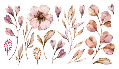 Flowers anemone and leaves handpainted set isolated on white background. Vector floral watercolor boho hand painted illustrations collection