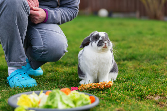 woman kneels beside a pet rabbit in front of a feeding dish