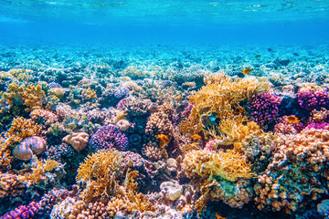 Spoed Fotobehang Koraalriffen Beautifiul underwater world with tropical fish and coral reefs