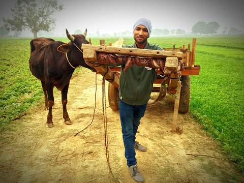 Portrait Of Farmer Pulling Cart By Bull On Dirt Road Amidst Field In Foggy Weather