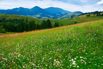 Fotorollo Grun nature, summer landscape in carpathian mountains, wildflowers and meadow, spruces on hills, beautiful cloudy sky