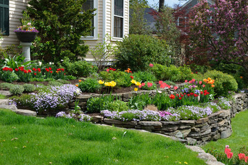 Poster Zwart Hilliside landscaping with natural stones, tulips and flox. Classic and colorful garden.