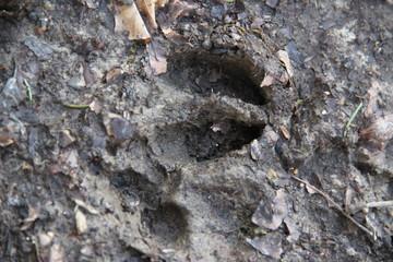 Foto auf Gartenposter Reh Roe deer foot print in the mud