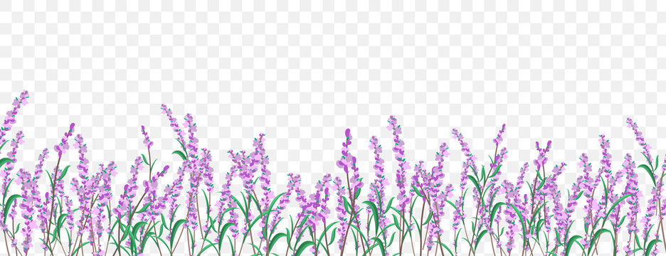 Lavender floral border on transparent background.
