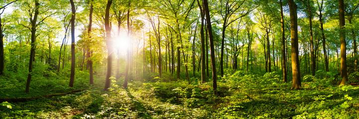 Wald im Frühling mit heller Sonne, die durch die Bäume strahlt Fotomurales