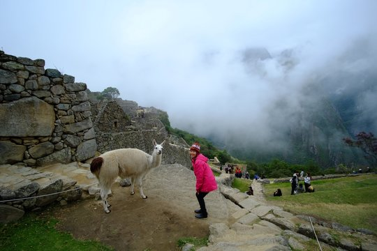 High Angle View Of Woman Standing By Llama On Mountain