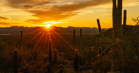 Aluminium Prints Arizona Desert Sunset in Tucson Arizona