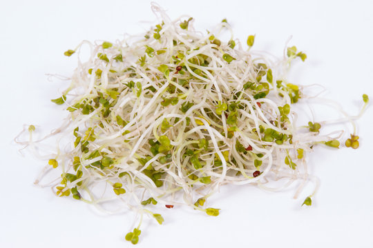 Fresh healthy alfalfa sprouts on white background. Food containing natural vitamins and minerals