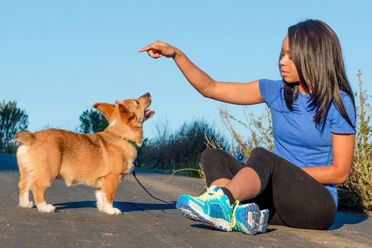 A millennial African American woman in athletic clothes training a Pembroke Welsh Corgi puppy.