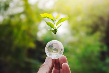 Papiers peints Jaune hand holding globe glass and tree growing green nature background. environment eco day concept