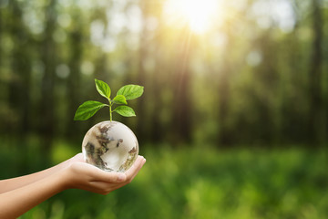 Tuinposter Natuur hand holding globe glass and tree growing green nature background. environment eco day concept