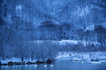 白鳥のいる風景