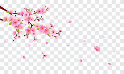 Wall Mural - Spring Sakura branch with falling petals Vector illustration. Pink Cherry blossom on fake transparent background.