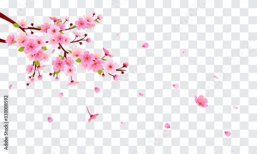 Wall mural Spring Sakura branch with falling petals Vector illustration. Pink Cherry blossom on fake transparent background.
