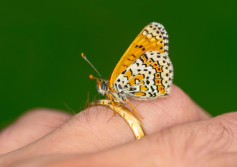 Foto op Plexiglas Vlinder Stock Image butterfly at your fingertips