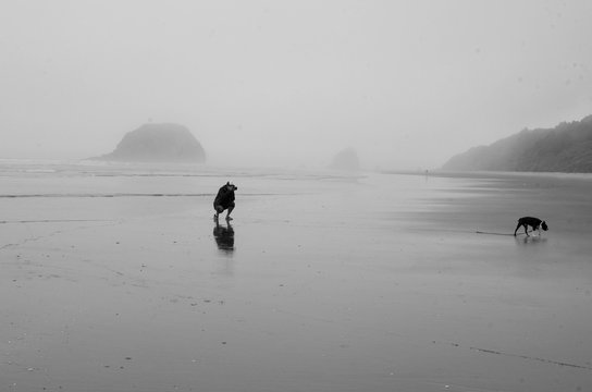 Man Taking Picture Of Boston Terrier Dog On Beach