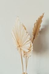 Tan fan craft leaves on white background. Minimal floral concept.