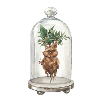 Mandrake ans glass dome. Watercolor illustration of fantasy creature: folklore love plant with roots. Isolated object on white background