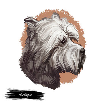 Yorkiepoo dog digital art illustration isolated on white.