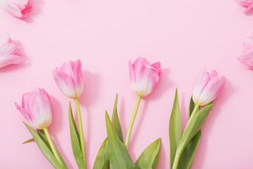 Acrylic Prints Tulip beautiful pink tulips on pink background
