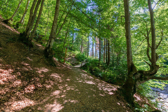forest trail on the hillside. beautiful nature scenery with beech trees on a sunny day. wooden bridge above the small brook