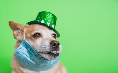 Zelfklevend Fotobehang Hond Cute dog in Leprechaun wearing protective face mask on a green background. March 17, happy st patricks day Coronavirus concept Pandemic quarantine