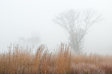 Poster Autumn Frosted autumn tall grass prairie in fog, Fort Custer State Park, Michigan, USA