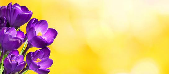 Foto op Canvas Krokussen Wide Angle floral template for design greeting card