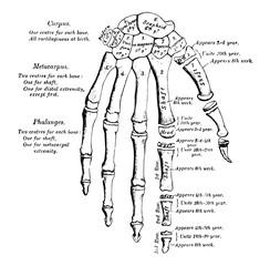 Hand Development, vintage illustration.