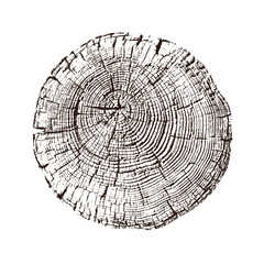 Black and white stamp of wood texture of tree rings from a slice of log. Contrast negative monotone image of cut tree.