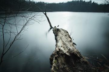 Foto auf Leinwand Dunkelgrau landschaft wald bäume see