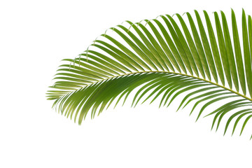 Concept texture leaves abstract green nature background tropical leaves coconut isolated on white background Wall mural