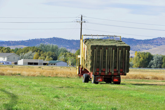 Full load of alfalfa bales on hay stacker.