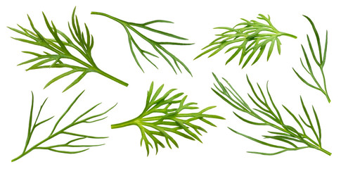 Dill isolated on white background with clipping path