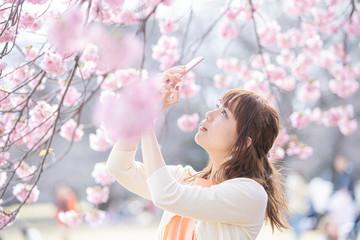 スマートフォンで桜を撮影する女性