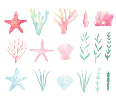 Watercolor sea, ocean life clip art. Marine plants, seashell, starfish set isolated on white background. Hand drawn watercolor illustration  with sea, underwater life.