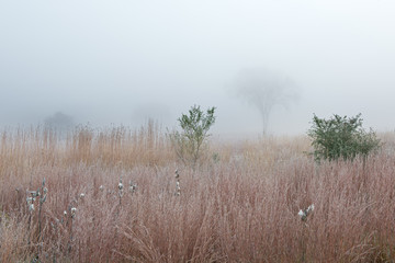 Frosted autumn tall grass prairie in fog with milkweed, Fort Custer State Park, Michigan, USA Fotomurales