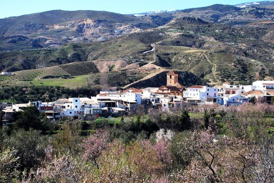 Spring trees in blossom surround a the village of Cadiar in the  Las Alpujarras region of Andalucia, Cadiar, Spain.