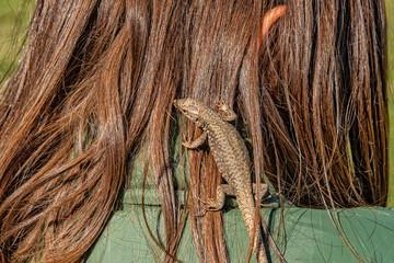 The lizard in the girl's hair