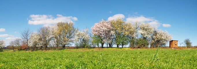 Fotoväggar - Bäume blühen am Feldrand im Frühling - Panorama
