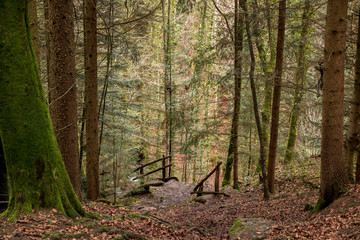 Spoed Fotobehang Bos rivier Stairway to the canyon and to the creek in the middle of the forest
