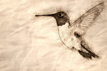 Wall Mural - Sketch of a Black-Chinned Hummingbird Searching for Nectar in the Flower Garden