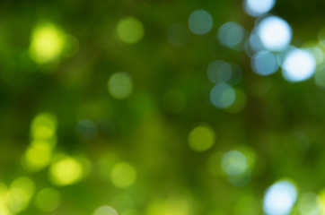 Wall Mural - Green bokeh nature abstract background